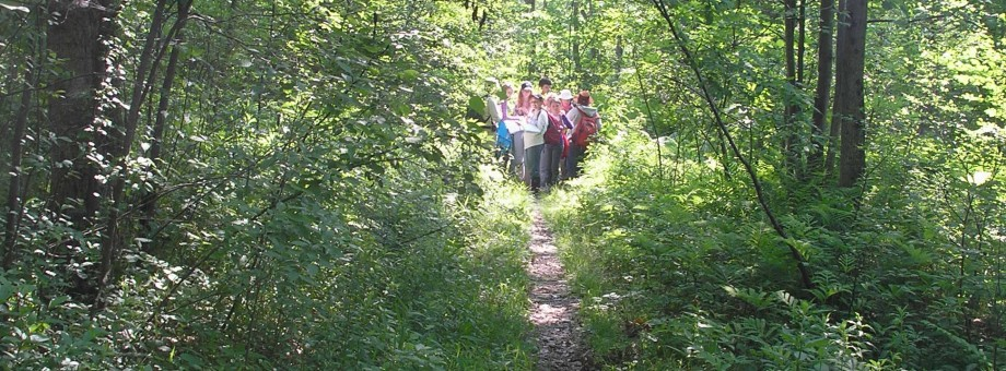 Dwaas Kill Nature Preserve Hike