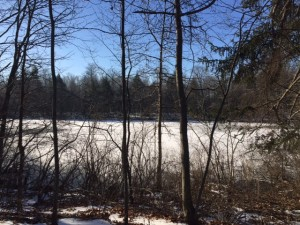 41 Acres Dragonfly Pond