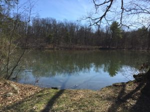 41 Acres Dragonfly Pond-Spring