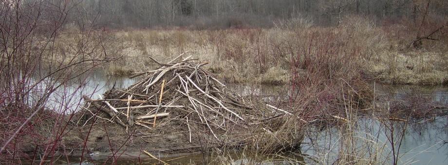 Beaver Dam Site